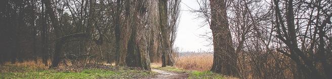 wycena lasu kraków
